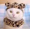 sweetkealoha userpic