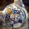 cat: LOVE ME