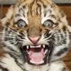 cat: PANIC!