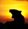 lioness338 userpic