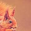 rogue equestrian: Red Squirrel