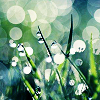 Raindrops on grass icon by operatore