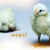 falling chicks, oops