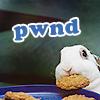 misc; random • bunny pwnd