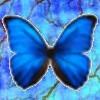 Kernezelda: butterfly
