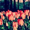 roseinthewinter userpic