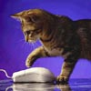 cat clicks mouse
