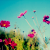cifcaara userpic