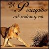 il_porcupino userpic