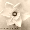 mirandastempest userpic