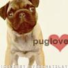 Pugs - Love