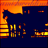 amishwedding userpic