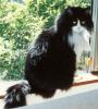 the cats of Queen Beruthiel
