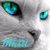 sramulder: Miau