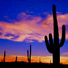 Louise - cactus sunset