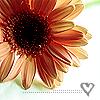 swt_azn_grl userpic