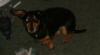 larrytdog userpic