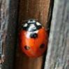 euro_ninka userpic