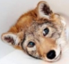 puppyface
