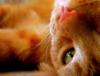 emmowyn userpic