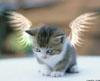 msBilley: день Ангела