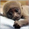 Mark: Jase Monkey
