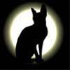 кошка и луна