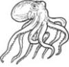 liveoctopus userpic