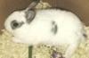 kendras_pet userpic