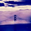 ファビュラス マックス: fog