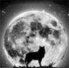 moonlightpaw userpic