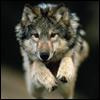 wolfyyy userpic