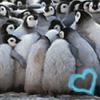 Even penguins need a hug sometimes
