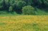 christufur userpic