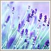 lilkittykat004 userpic