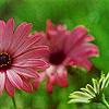 flower - please don't take