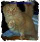 disaster_cat userpic