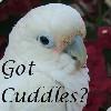 Got Cuddles?