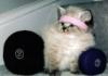 kittylifter userpic