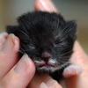 cat: teeeeeeny kitty baby