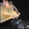 Possum and camera - photo icon