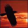 sanguineraven userpic