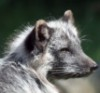 foxja userpic