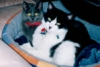 winnaff userpic