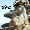 yar pirate squirrel