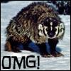 Badger OMG!