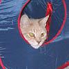 Bunker Kitty
