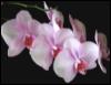 la_orquidea userpic