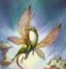 farie dragon