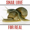 Animals - Snail Love